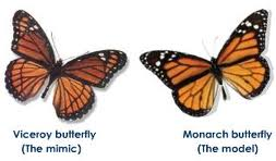 Viceroy and Monarch